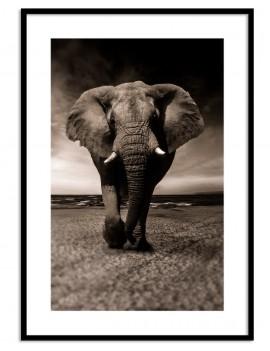 Cuadro Elefante Colección...