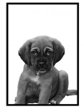 Cuadro Cachorro Colección...
