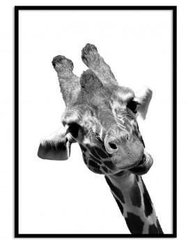 Cuadro jirafa Colección...