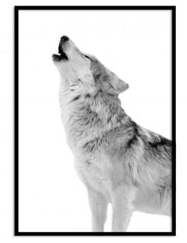 Cuadro lobo colección animales