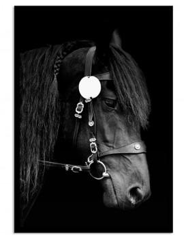 Cuadro caballo colección...