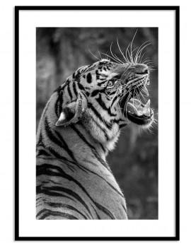 Cuadro tigre colección...