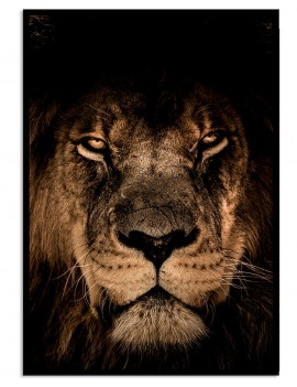 Cuadro león colección animales