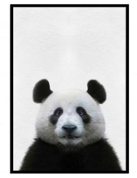 Cuadro oso panda colección...