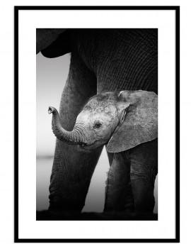 Cuadro cría elefante...