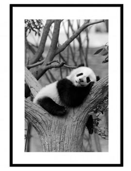 Cuadro panda colección animales
