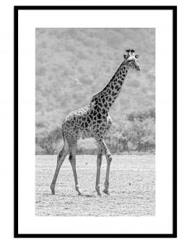 Cuadro jirafa colección animales