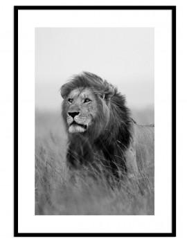 Cuadro leon colección animales