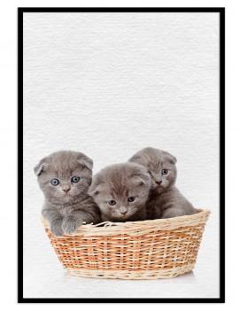 Cuadro gatitos colección animales