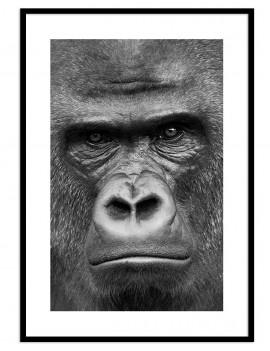 Cuadro gorila colección animales