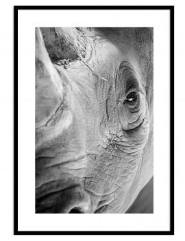 Cuadro rinoceronte...