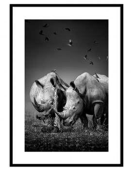 Cuadro rinocerontes...