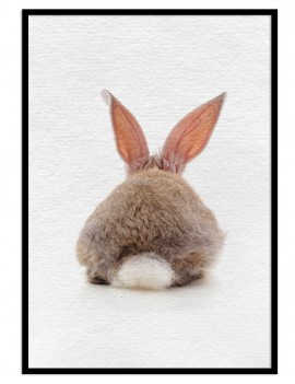 Cuadro conejo colección...