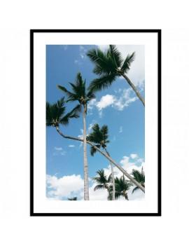 Cuadro de foto palmeras...