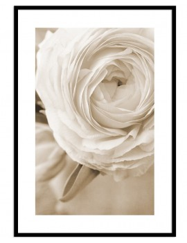 Cuadro botánica flor