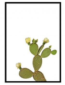 Cuadro botánica cactus