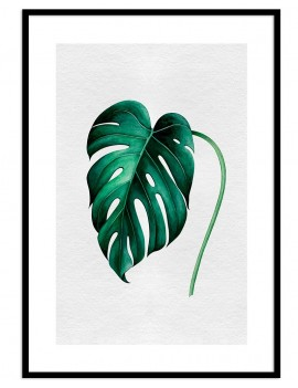 Cuadro botánica hoja