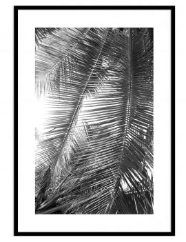 Cuadro botánica palmera