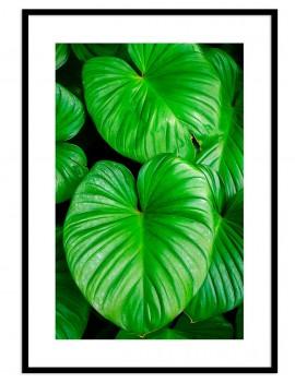 Cuadro botánica hojas