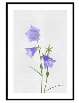 Cuadro botánica flores